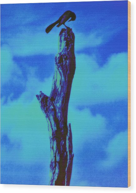 Praying Black Bird Grace In Nature Wood Print