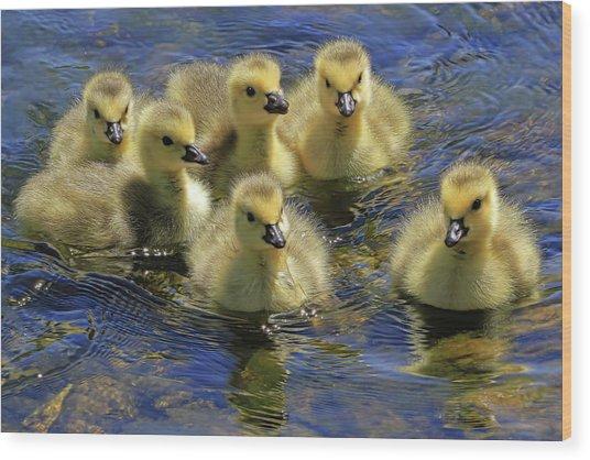 Precious Goslings Wood Print
