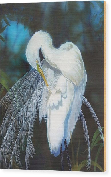 Preening Egret  Sold Wood Print