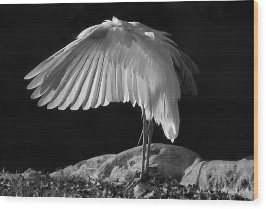 Preening Great Egret By H H Photography Of Florida Wood Print