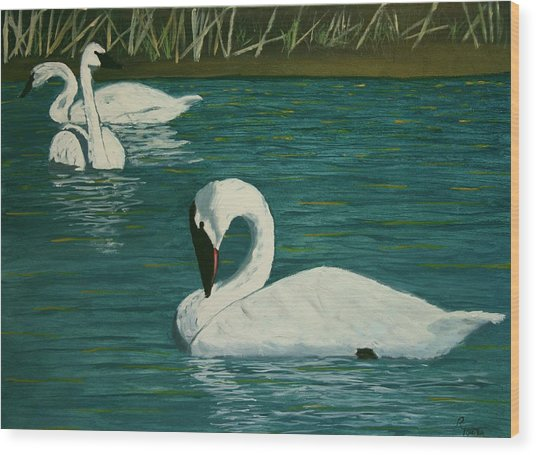 Preening Swans Wood Print by Robert Tower