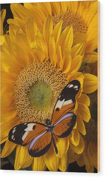 Pretty Butterfly On Sunflowers Wood Print