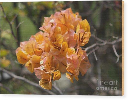 Pretty Flower Wood Print by Dick Willis