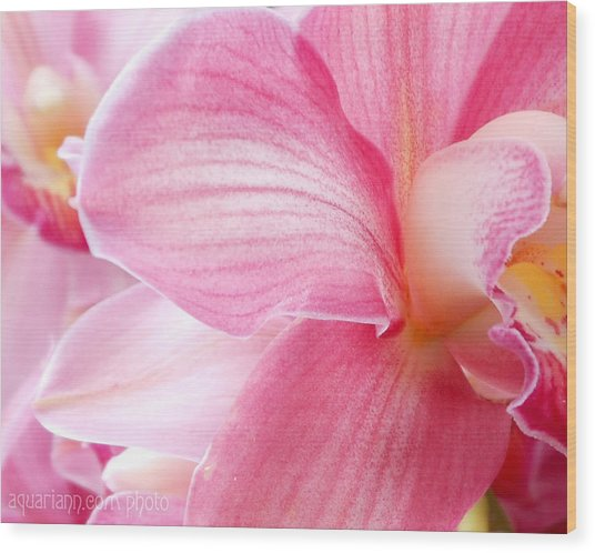 Pretty In Pink Orchid Petals Wood Print