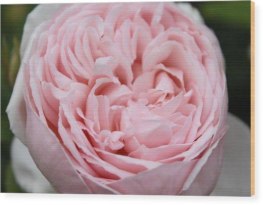 Pretty In Pink Wood Print by Sabina Thomas