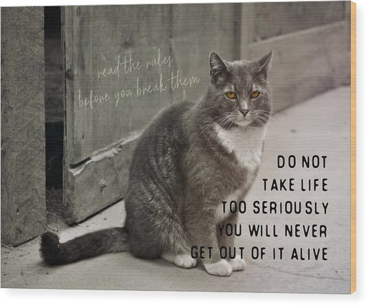 Pretty Kitty Quote Wood Print by JAMART Photography