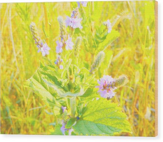Pretty Lilac Wood Print