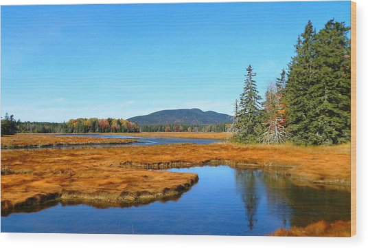 Pretty Marsh Wood Print