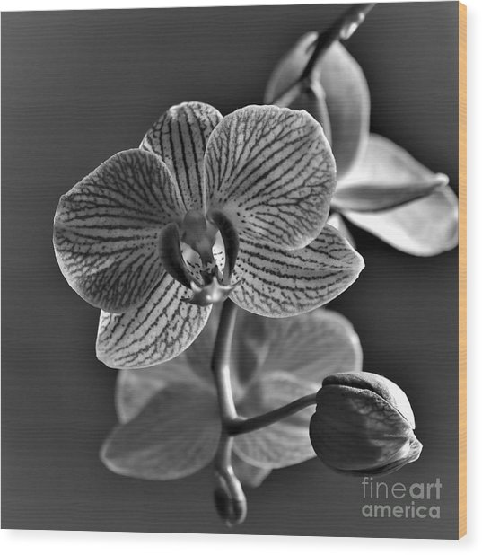 Wood Print featuring the photograph Pretty Orchid Bw by Jeremy Hayden