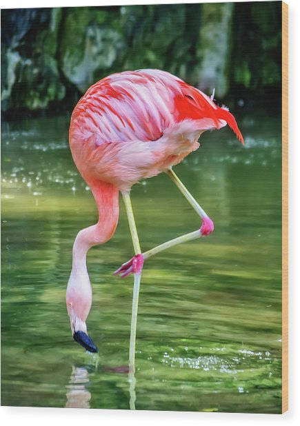 Pretty Pink Flamingo Wood Print