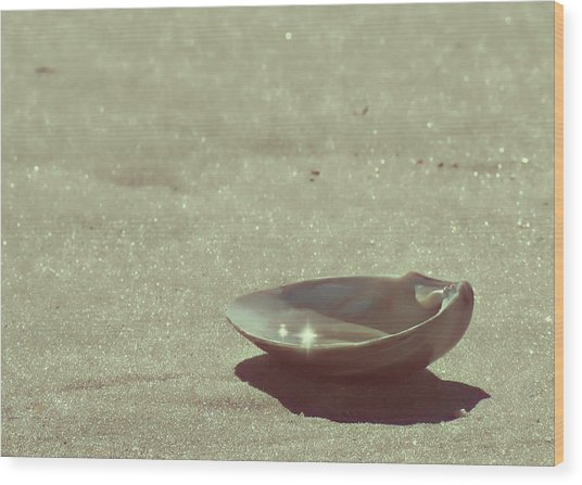 Pretty Seashell Wood Print by JAMART Photography
