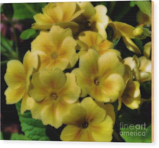 Pretty Yellow Primrose Wood Print