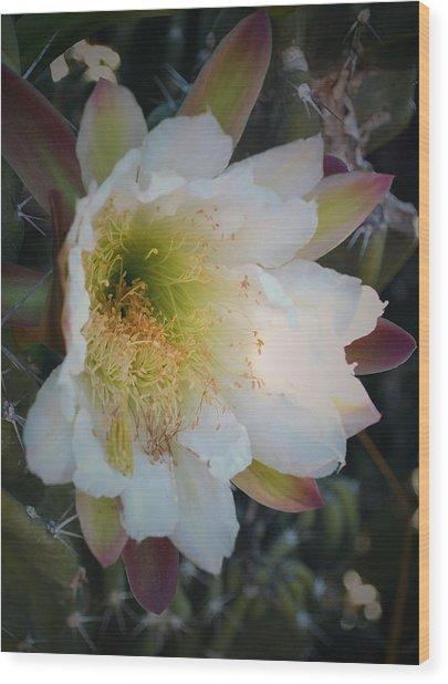 Prickley Pear Cactus Wood Print