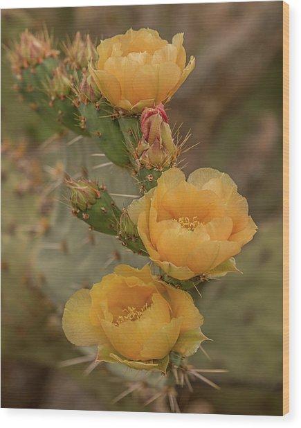 Prickly Pear Blossom Trio Wood Print