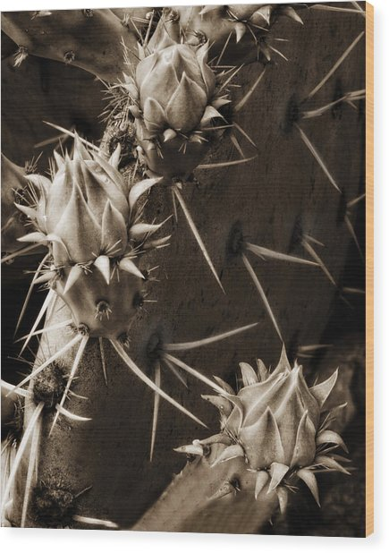 Prickly Pear Buds Wood Print by Bob Coates