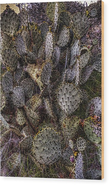 Prickly Pear Cactus At Tonto National Monument Wood Print