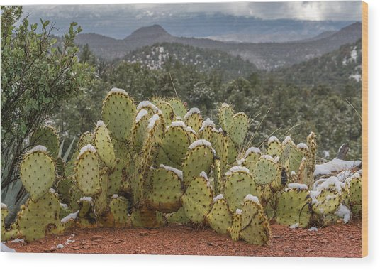 Cactus Country Wood Print