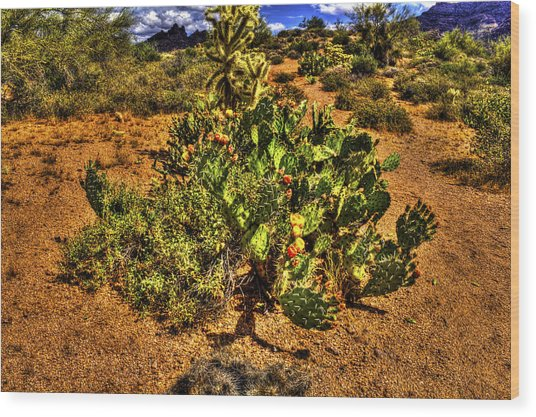 Prickly Pear In Bloom With Brittlebush And Cholla For Company Wood Print