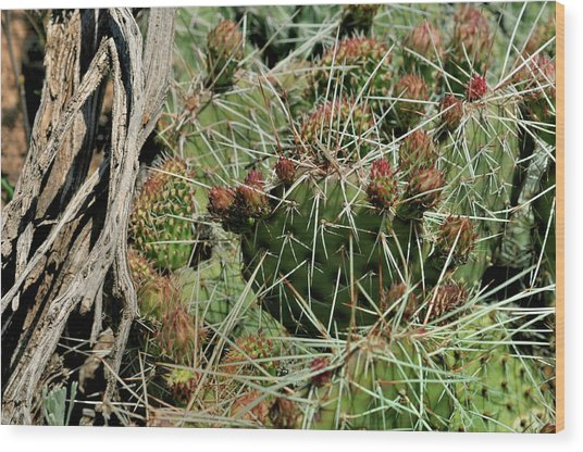 Prickly Pear Revival Wood Print