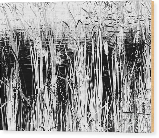 Private Duck Swimming Hole 2 In Black And White Wood Print by Elizabeth Ann  Roy