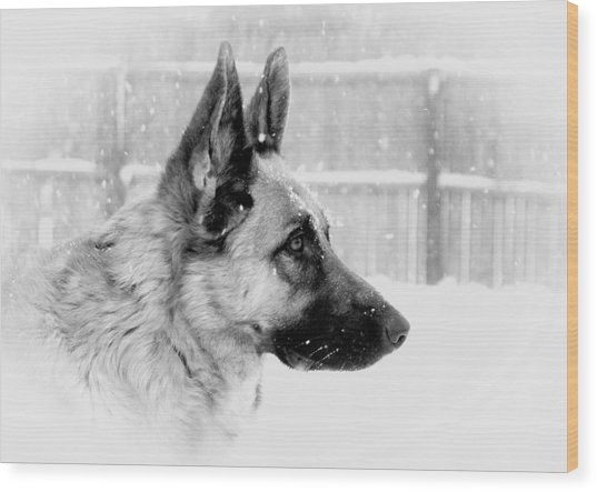 Profile Of A German Shepherd Wood Print