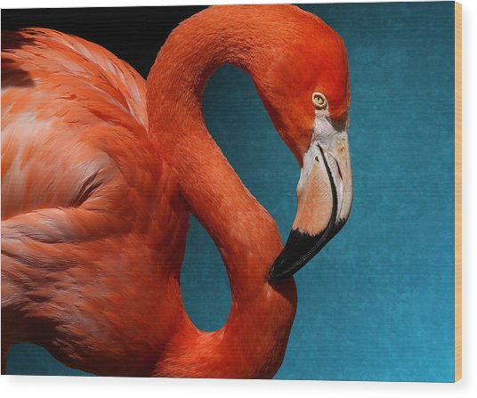 Profile Of An American Flamingo Wood Print