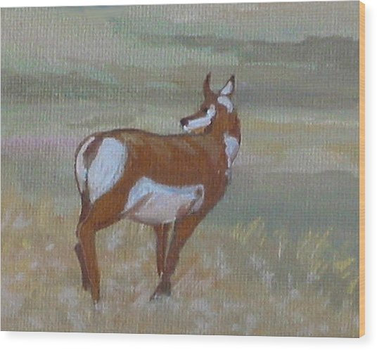 Prong Horned Antelope Wood Print