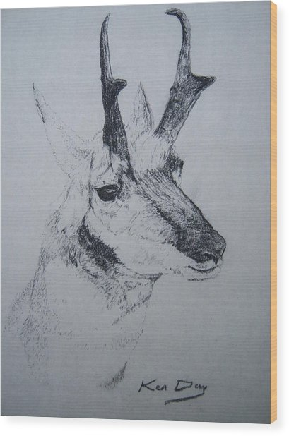Pronghorn Antelope Wood Print by Ken Day