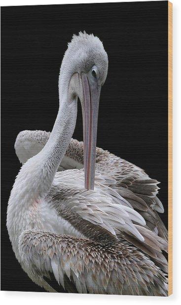 Prospecting - Pelican Wood Print