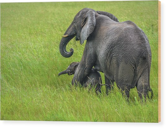 Protective Elephant Mom Wood Print
