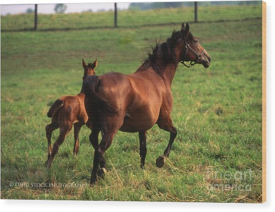 2f205 Protective Mare And Foal Wood Print