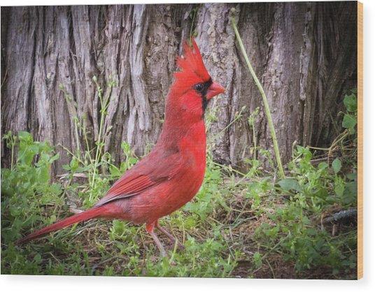 Proud Cardinal Wood Print