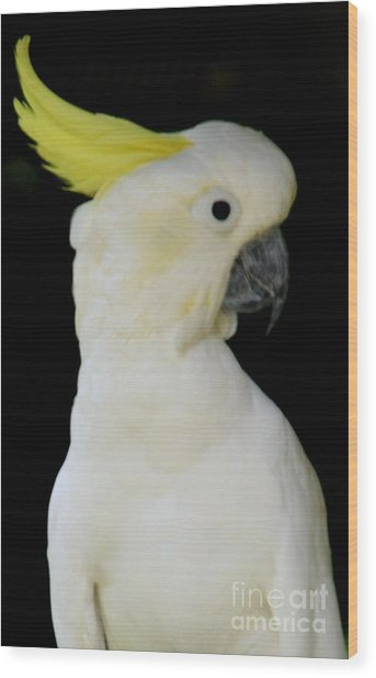 Proud Cockatoo Wood Print