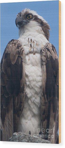 Proud Hawk Wood Print