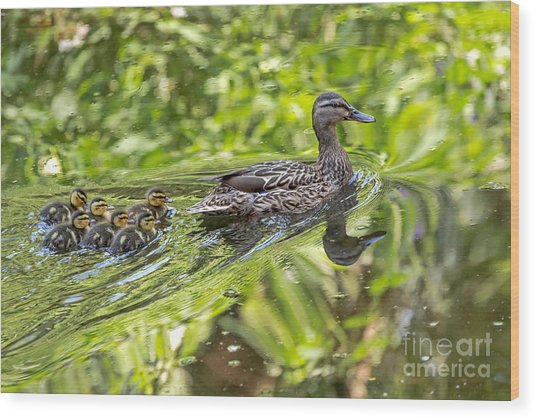 Wood Print featuring the photograph Proud Mama by Kate Brown