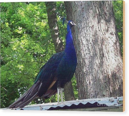 Proud Peacock Wood Print by Emily Kelley