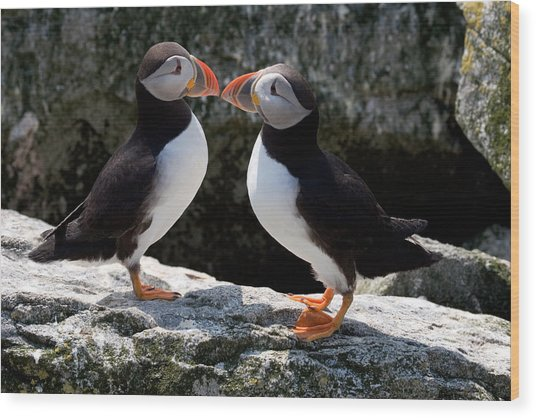 Puffin Love Wood Print