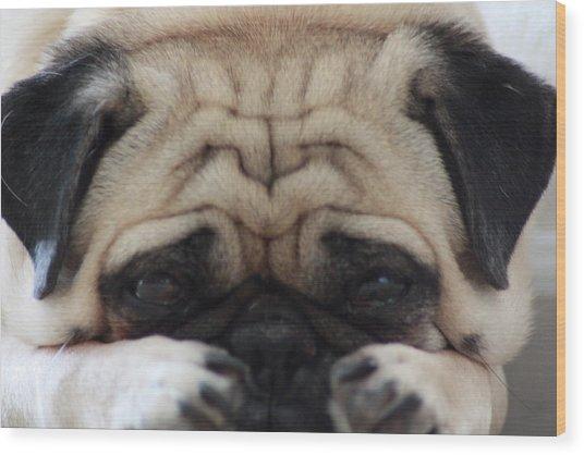 Pug Face Wood Print