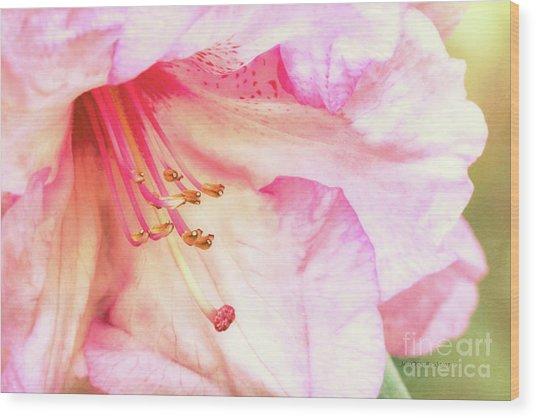 Puget Sound Rhododendron Wood Print by Jean OKeeffe Macro Abundance Art