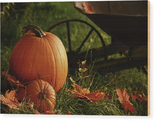 Pumpkins In The Grass Wood Print