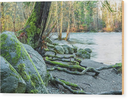 Puntledge Park-1 Wood Print