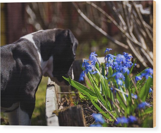 Puppy And Flowers Wood Print