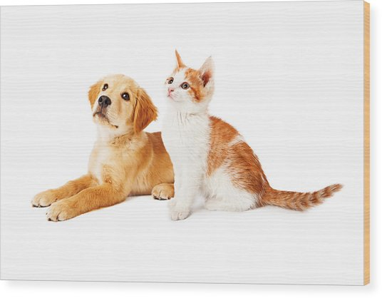 Puppy And Kitten Looking To Side Wood Print