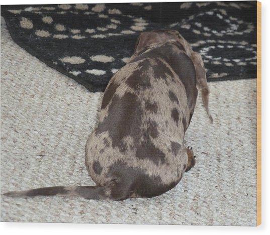 Puppy Behind Wood Print