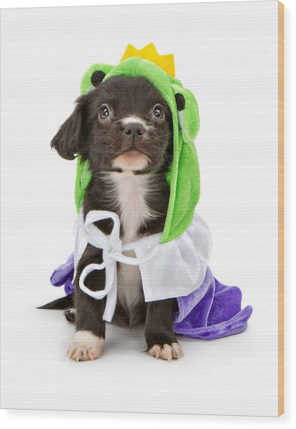 Puppy Frog Prince Wood Print