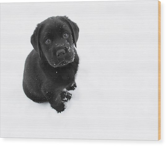 Puppy In The Snow Wood Print