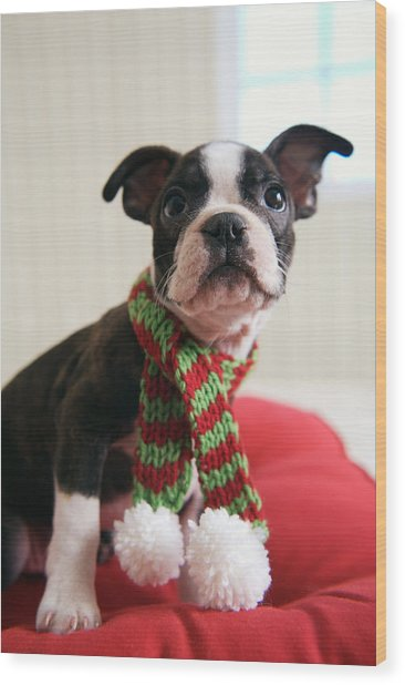 Puppy Wearing Red And Green Striped Wood Print