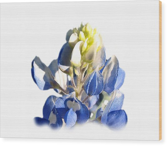 Pure Blue Bonnet Wood Print