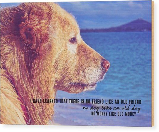 Pure Joy Quote Wood Print by JAMART Photography