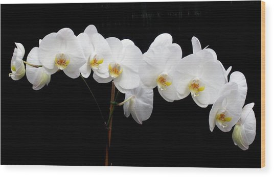 Pure Orchid Wood Print by Jeanette Oberholtzer